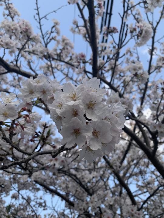 お花づくしの春です🌸