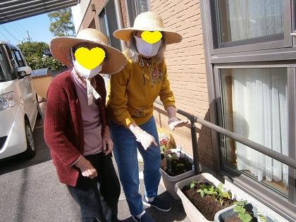 野菜の苗植えました🌱